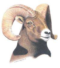 Big Horn logo
