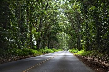 Tunnel of Trees Kauai