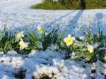 Flowers_in_snow