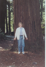 Big_sur_trees